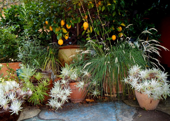 California Native Plants For Small Shady Corners